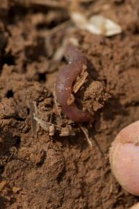 Soil organisms, including microbes, are necessary for healthy forest soils.