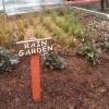 Rain Garden (Custom)