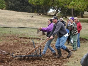 Scott Eden trying his hand at draft horse ploughing.