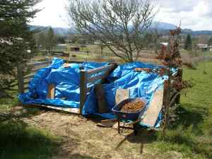 Manure bin system covered with blue tarps