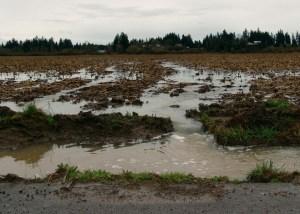 Don't lose your valuable soil to erosion. (Photo: Les Bachelor)