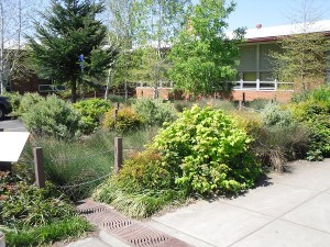 Consider a rain garden for low, wet areas on your property. (Photo: EmilyBlueGreen)