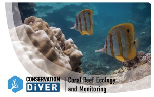 Coral Reef Ecology and Monitoring