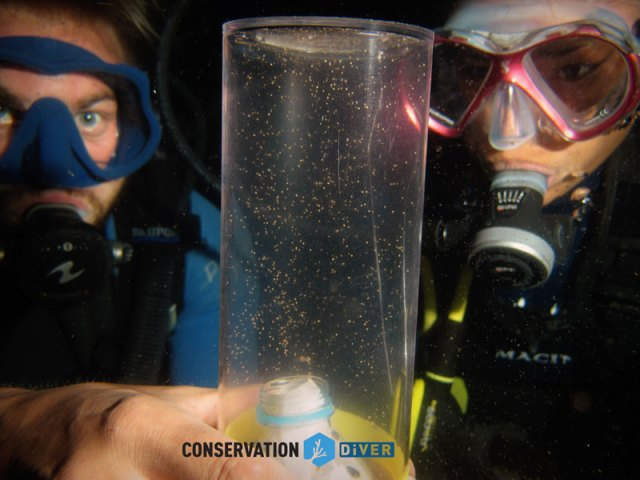 Coral Spawning collection