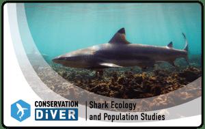 shark monitoring