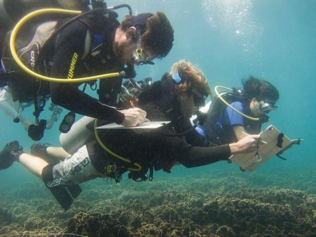 Coral Monitoring