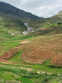 Hand-cut rice terrace
