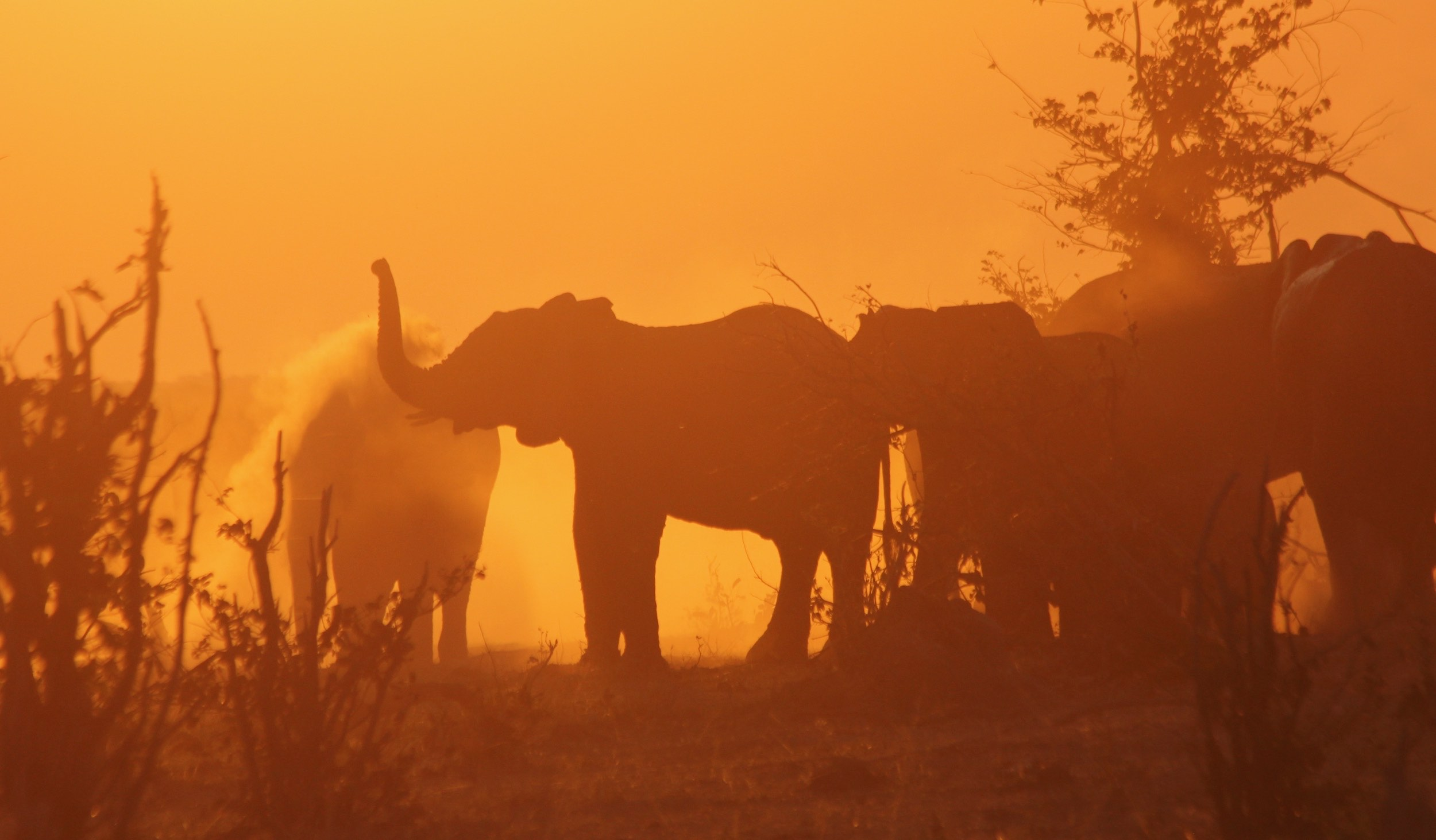 Elephants silhouetted against the setting sun.