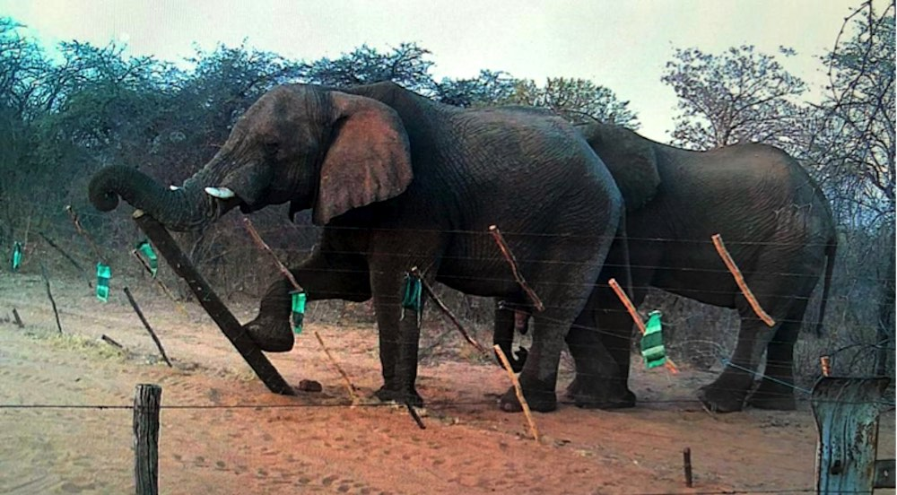 Two elephants pushing over a fence.
