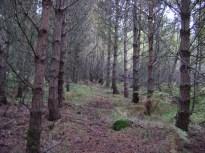 Plantations versus natural woodland regeneration...