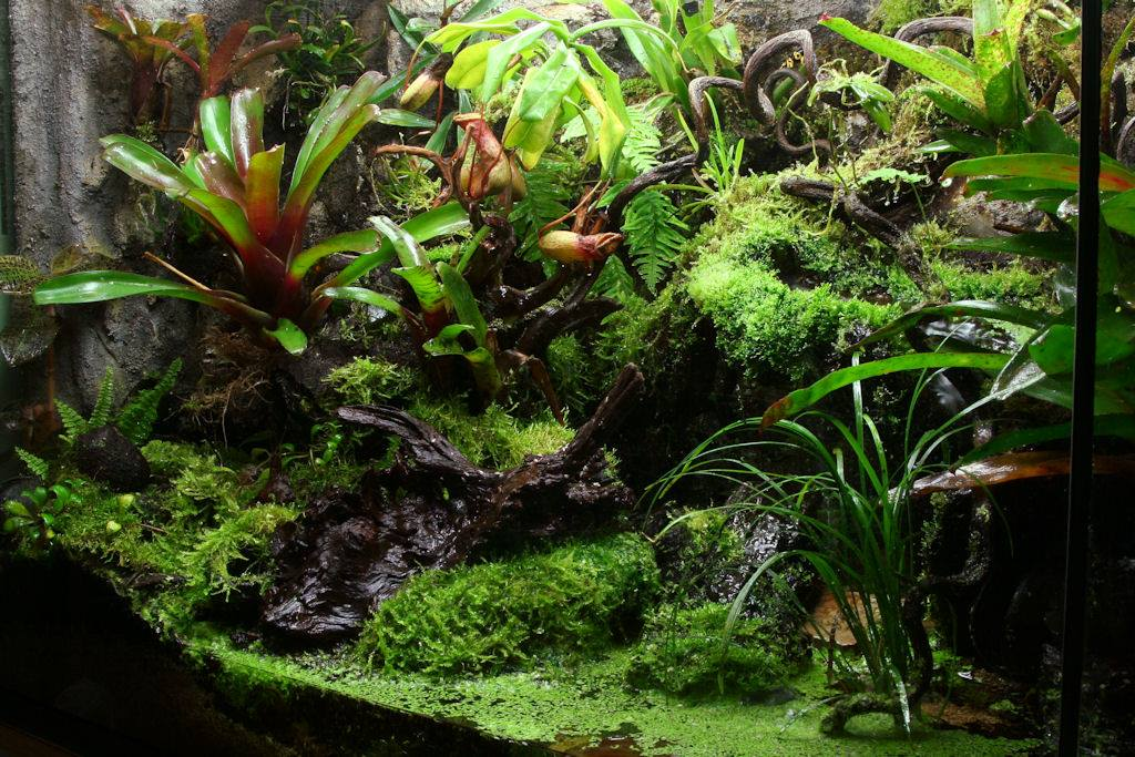 Diy Water Garden Fish Tank