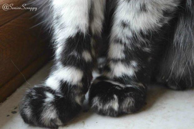 05-scrappy-the-cat-710x471-622x413
