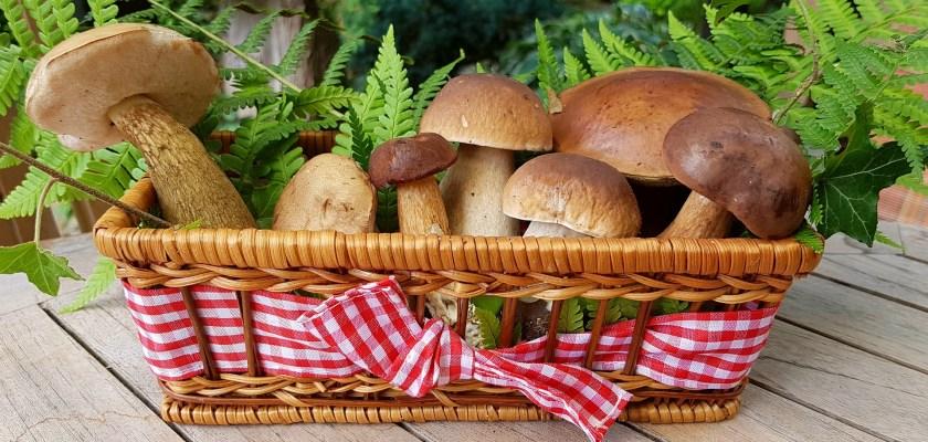 Wood Ear Mushroom Recall Consider The Consumer