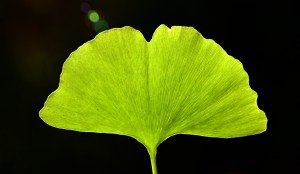 The Ginkgold Ginkgo Biloba Class Action Settlement The Ginkgold Ginkgo Biloba Settlement Consider The Consumer