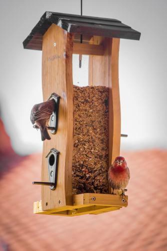 Morning Song Bird Food Lawsuit