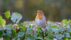 Morning Song Bird Food Lawsuit Settlement