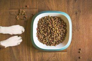 Midwestern Pet Food Class Action Lawsuit Sportsmix Class Action Lawsuit Consider The Consumer