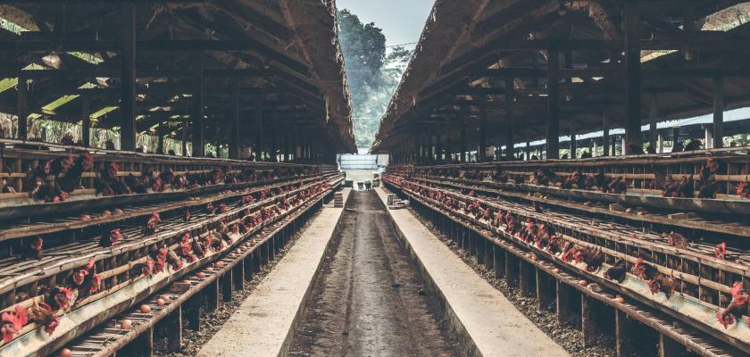 Delaware & Mountaire Settlement For $205 Million Contaminated Poultry Plants