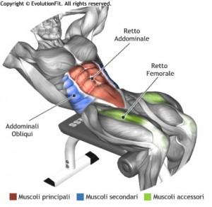 mappa-muscolare-addominali-crunch-panca-romana