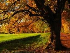 Sognare un bosco fitto e buio: sogno di Andrea