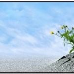 ¿Cómo Tener Determinación En La Vida?