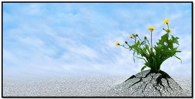como tener determinación