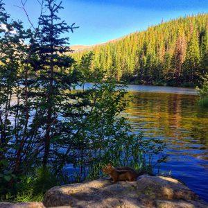 Chipmunk at Bear Lake in Rocky Mountains