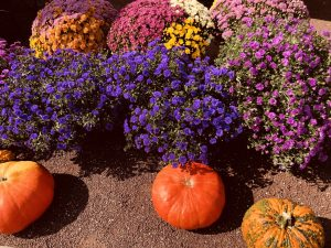 Fall scenes at Carmel's Farmers Market