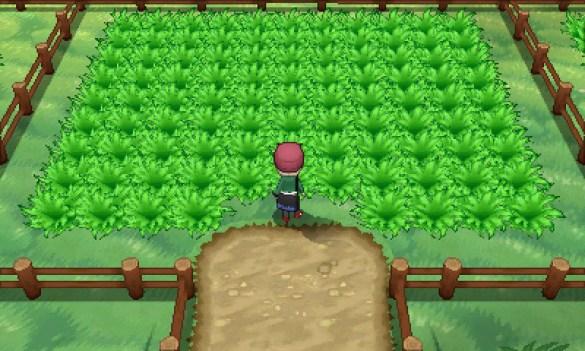 Safari amistad Pokemon shiny