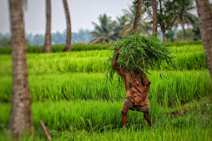 indian agritech startups are surviving and growing during the pandemic | krasia