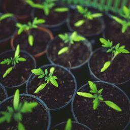 Plants - Alternatives aux pesticides de synthèse