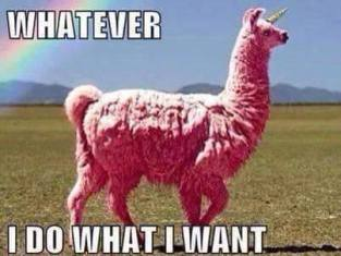 whatever i do what i want pink llama