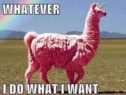 whatever i do what i want pink llama