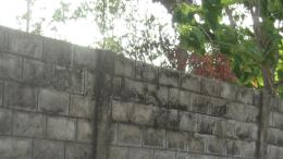 clôture au Togo