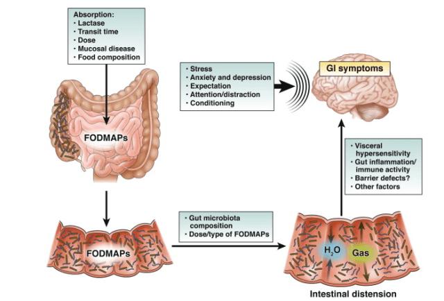 Mecanismo de acción de dietas FODMAP