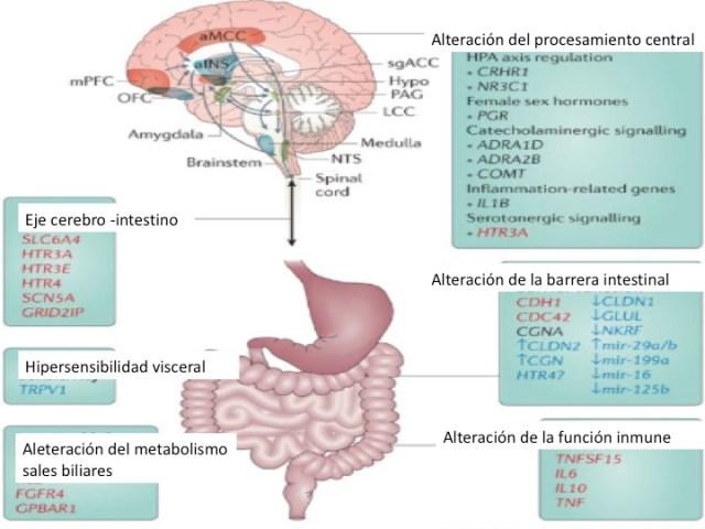 Nuevas opciones en el tratamiento del colon irritable | MÉDICO ...