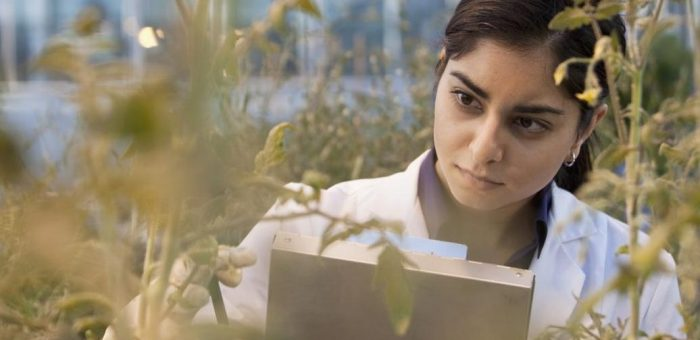 Femmes, environnement et innovation