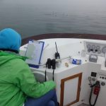 IWDG Consulting complete the first of 6 harbour porpoise surveys in Dublin Bay SAC