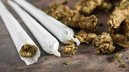 News Picture: Yes, Pot IsStronger Now Than in Decades Past, Study Finds