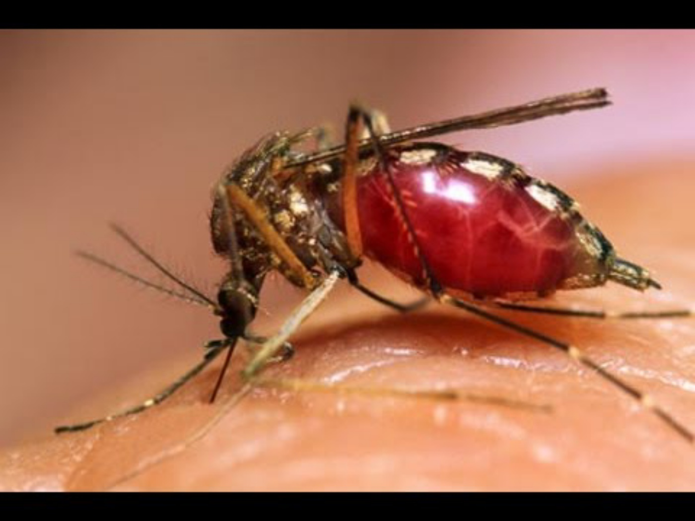 Consumer Info: Symptoms and Cures for Dengue