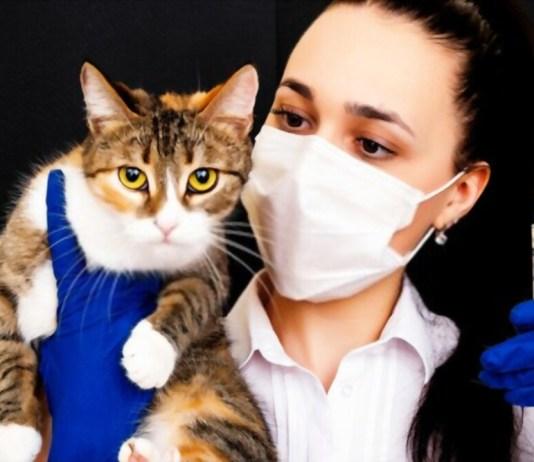 How To Give A Cat Liquid Medicine