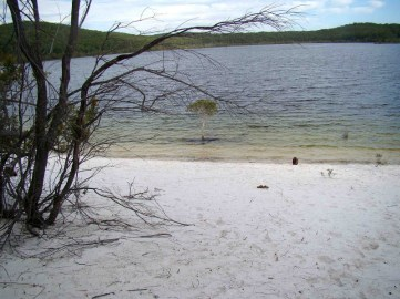On 15/3/13 the same focal point, the base of the small melalueca was immersed in the lake