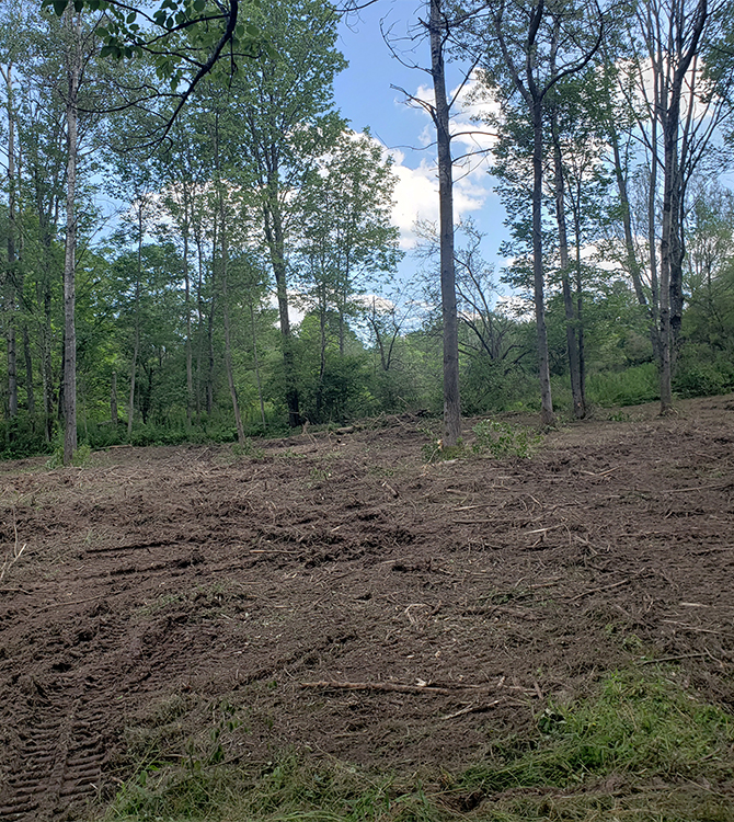 After photo of a project to clear some land