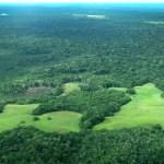El Supremo de Colombia ordena proteger la Amazonía de la deforestación