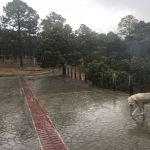 Está lloviendo en la sierra de Durango, lo mejor que pudo sucederle a nuestros bosques