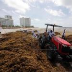 Autoridades retiran sargazo de las playas del caribe mexicano
