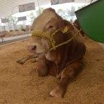 Confían ganaderos en que programas emergentes sigan en pie