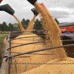 La cosecha de granos en Brasil caerá un 5,3 por ciento en 2018, prevé el Gobierno