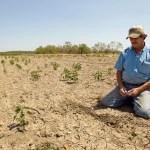Agricultores preocupados por efectos de la sequía en el oriente de Bolivia