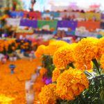 Flores en altares, tradición que continúa viva en México